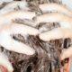 Effective Hair Loss Shampoos